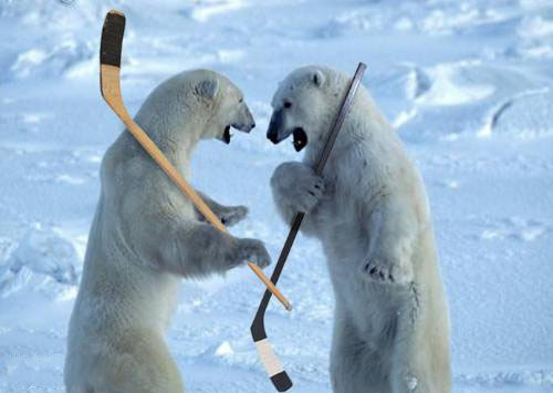 Kyoshiro the gimpuser - Page 3 Polar-bears-hockey